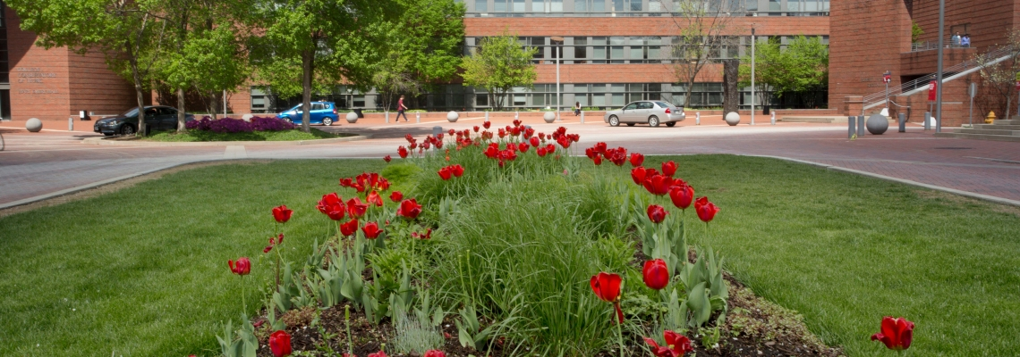 CCM Village in the spring of 2014. Photography by Dottie Stover.